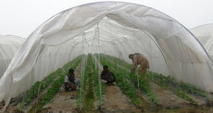 Tunnel_Farming-6